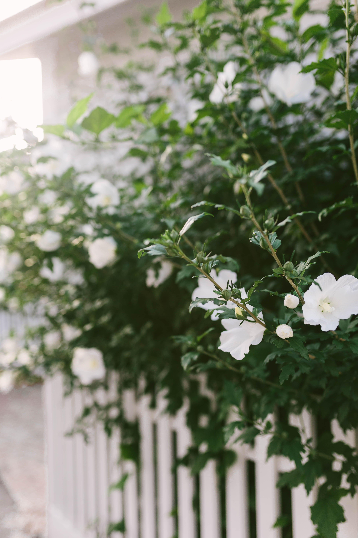 Nantucket Flowers